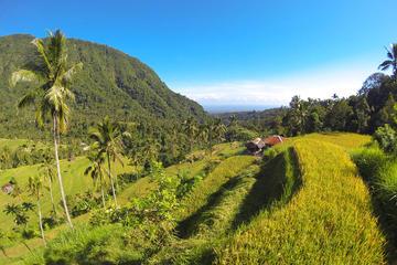 Bali Tagestour mit Sonnenaufgang Beobachten in Kintamani, Lemukih...