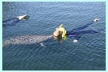 Crystal River Manatee Swim