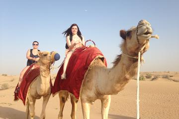 Dubai Overnight Safari Experience with Camel Ride