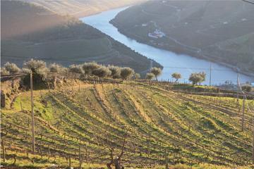 Recorrido vinícola por el valle del Duero: visita a tres viñedos con...