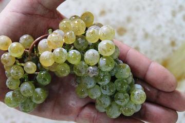 Viagem diurna para grupos pequenos para Região de Vinho Alvarinho...