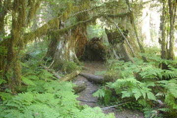 Private Olympic National Park...