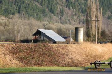 Wild Eagles and Salmon Wildlife Tour from Seattle