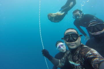 Full-Day Discover Apnea