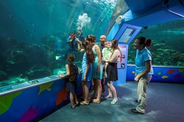 Reef HQ Great Barrier Reef Aquarium...