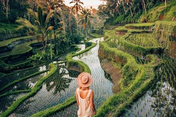 Ubud Day Trip with Private & Friendly...