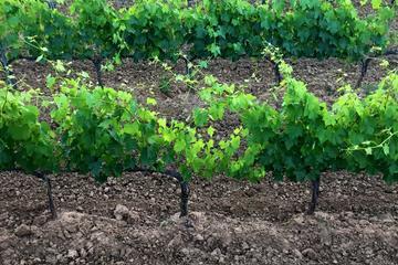 Visite privée: dégustation des vins de Montalcino