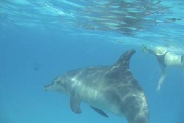 Dolphin House en Banana Boat Fun vanuit Hurghada