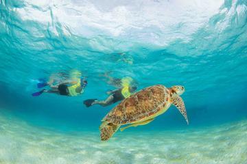 Buceo de superficie desde la Riviera Maya