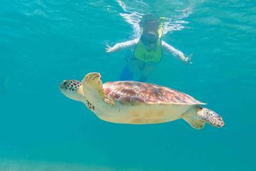 Schnorcheln Xtreme Cancun