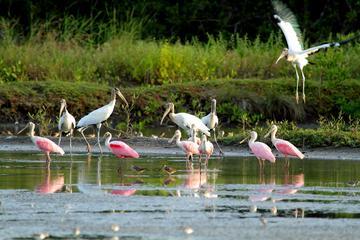 Birdwatching at Mundo Aventura Natural Park