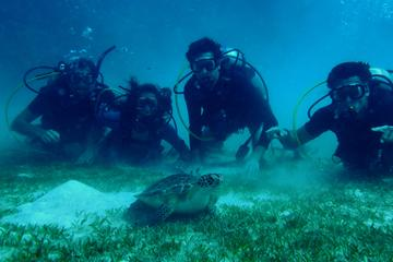 Certified Guided Reef Dive in St...