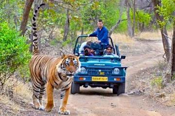 Golden Triangle & Tigers (Delhi-Agra-Jaipur-Ranthambore National Park)