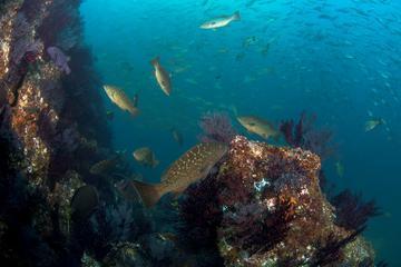 Mergulhos em Cabo San Lucas e no...