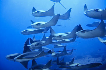 Plongée sous-marine à 2bouteilles dans le Corridor pour plongeurs...