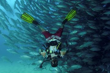 Visite avec plongée sous-marine d'une...