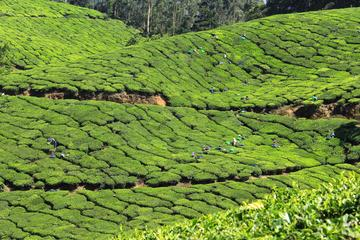 Bästa av Kerala 7 dagar privat tur ...