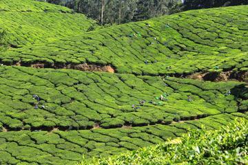 Best of Kerala 7 jours Visite privée...