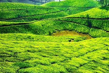 Munnar Sightseeing Tour with Plantation walk - Private Tour