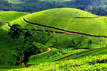 Private 7-Day Kerala Tour with Houseboat Cruise from Delhi with 2-Way Flights