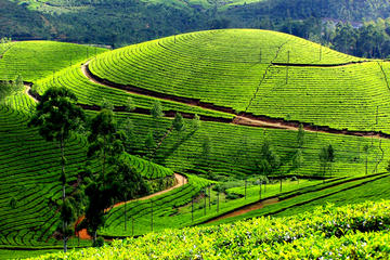 Private 7-Day Kerala Tour with Houseboat Cruise from Mumbai with 2-Way Flights