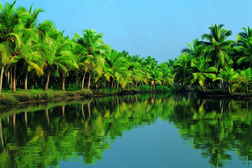 Queen Mary 2  Kochi Shore Excursion: Alleppey Backwater Houseboat...