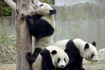 Excursão para grupos pequenos de 14 dias na China: Pequim, Xi'an...