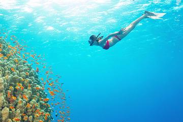Snorkeling Tour at Blue Lagoon Bali...