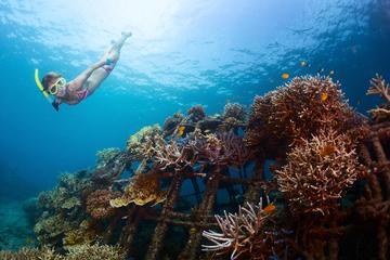 USS Liberty Shipwreck Snorkeling at Tulamben Bali
