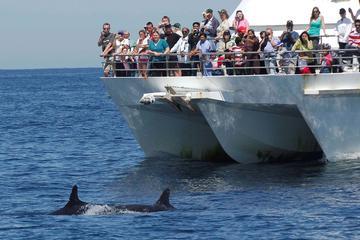 Excursão de observação de golfinhos no Porto Stephens saindo de Sydney