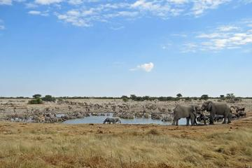 3 Day Etosha Accommodated