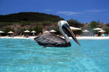 Private Curaçao Beaches Tour...