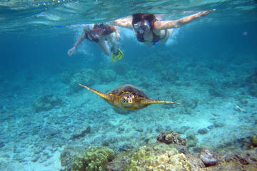 Snorkel Eco Tour North S West Coast Honolulu Options All Gear Provided
