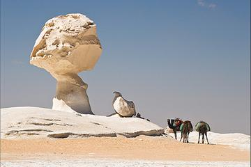 Bahariya Oasis The Golden Mummies Temple of Alexander Black Mountains Sand Dunes and The Salt Lake