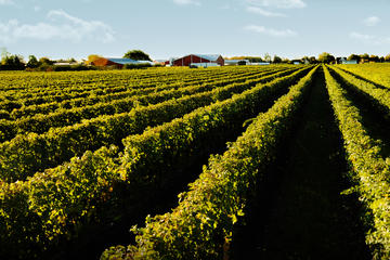 Full-Day Niagara Winery Tour from...