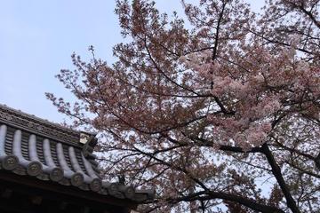 Private Cherry Blossom Event...