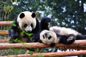 10-Day Best of China with Pandas Private Tour: Beijing, Xian, Chengdu...