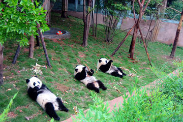 13-Day Grand China with Pandas Join-in Tour: Beijing, Xian, Chengdu...