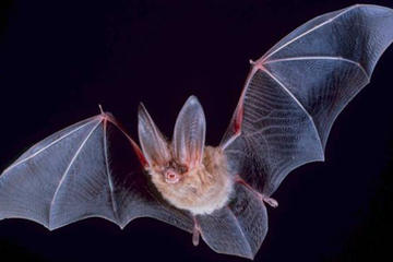 Hong Kong Wildlife Night Walking Tour: Fireflies and Bats