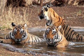 3 Days Corbett Tiger Safari Private Tour from Delhi