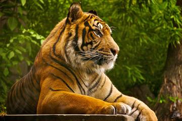 4 Days Ranthambore Tiger Safari Including Agra and Jaipur Tour from Delhi
