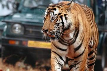 6-Day Golden Triangle Private Tour from Delhi with Ranthambore