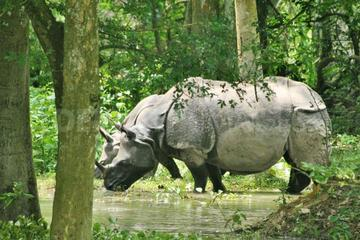 6-Day Tour of Exotic Northeast India: Mawsmai Caves, Double Decker Living Root Bridge and Kaziranga National Park