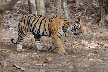 Gita giornaliera al Parco nazionale Panna da Khajuraho