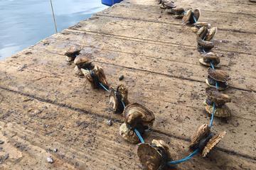 Excursão vinícola e com ostras em Peljesac saindo de Dubrovnik
