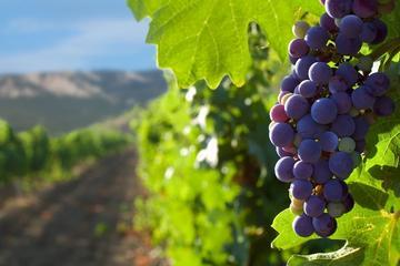Excursão particular de Santiago, incluindo degustação de vinhos