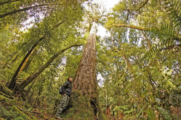 Randonnée d'une journée complète dans la forêt de Whirinaki