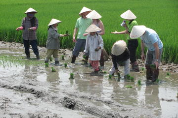 Attractions g Activities Hoi An Quang Nam Province.