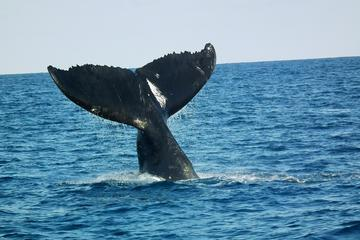 Avistamiento de ballenas en las islas de Taboga y Taboguilla