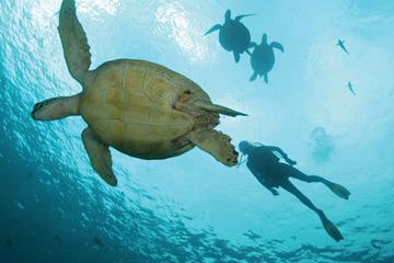 Dois oceanos em um único dia para mergulhadores certificados saindo...